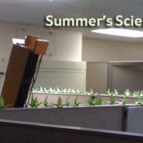 Podcast: Summer's Scientists
